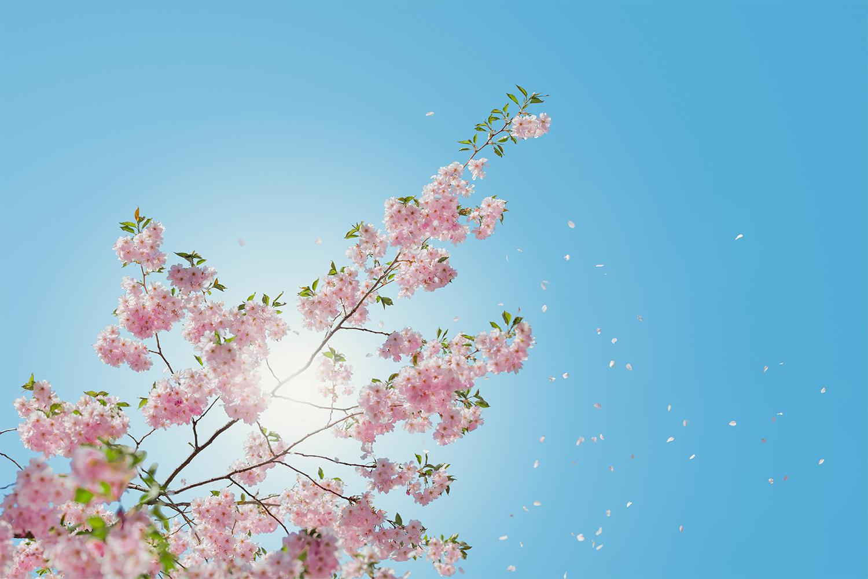 「やさしくきらめく春の歌 出会いと別れ、新しく始まる季節に」のアイキャッチ画像